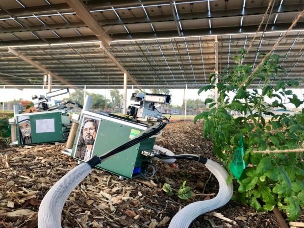 Ricerca: con l'agro-fotovoltaico, grandi benefici per le colture sotto i moduli fv