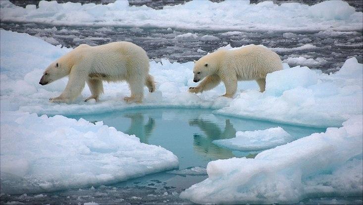 Polo Nord senza ghiacci in estate prima del 2050