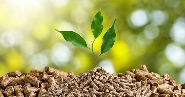Associazioni biomasse, appello al Governo per una maggiore attenzione verso il comparto