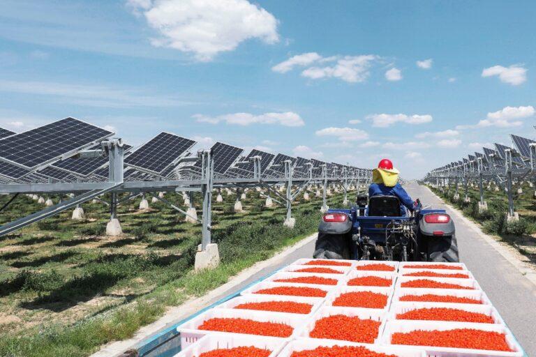 Agro fotovoltaico, nasce in Cina l'impianto più grande al mondo