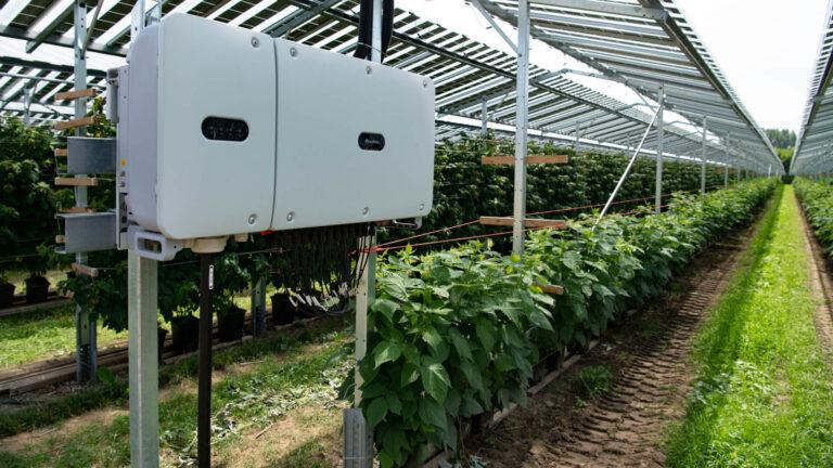 BayWa r.e., potenziato il progetto agro-fotovoltaico nei Paesi Bassi