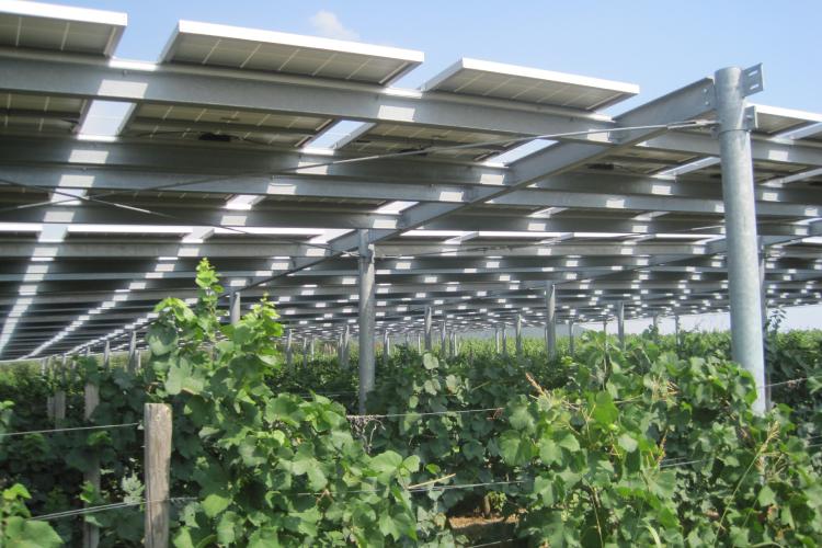 Transizione ecologica, Enel e CREA insieme per lo sviluppo dell'agrivoltaico