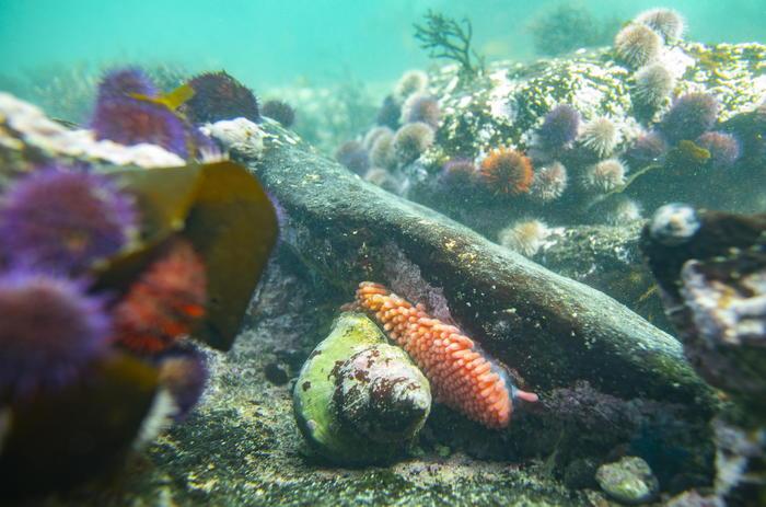 Cambiamenti climatici: Enel e Extreme E indagano su alterazioni vita marina